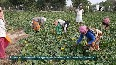 COVID-19: Demands of green veggies surges in Aligarh