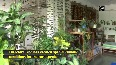 Bhopal woman grows 'mini-forest' at her house backyard
