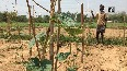 Farmers facing trouble due to lack of fertilizers amid lockdown in WB s Midnapore