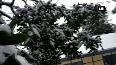 SEE: Snow turns Shimla into a beauty!