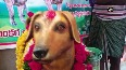 Man constructs statue in memory of his dog in AP