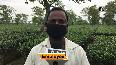 Lockdown 4: Work resumes at tea gardens in Assam