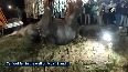 Watch Baby elephant rescued from well in TN s Dharmapuri.mp4