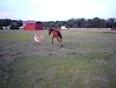 Baby horse   dog play tag
