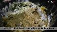 See: How to make Corn Potato Tikki