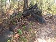 Sukma attack: The forest where the ambush took place