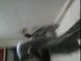 Video0081