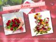 Valentine Roses Special