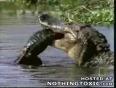 Fish_eat_Alligator