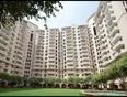 DLF Wellington Estate Plus919560214267 Gurgaon Phase 5 V Resale Rent Sale Buy Floor SitePlan Price Layout LocationMap