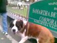 Huge dog