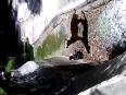 Delhi Zoo tiger killing full video