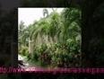 :-www.artificialgrasslasvegasnevada.com-