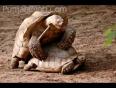 Animal_sex_so_funny_-_(punjabimob.com)