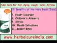 15-benefits-of-the-tulsi-(holy-basil)