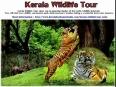 Kerala tourism by  www.keralabackwaterindia.com