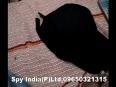 BLUETOOTH SPY CAP EARPIECE IN PANIPAT HARYANA, 09650321315, www.spyindias.in