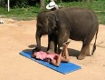 It's time for a Thai ELEPHANT MASSAGE