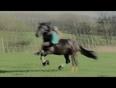 Horse riding stunt fail
