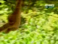 Funny ~ monkeys hunt