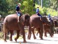 Watch: AMAZING elephant stunts