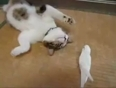 Cat playing with a bird, really very cool