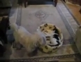Dog and cat fight for bed