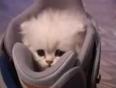 Little kitty, big meow