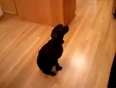 Dog bares it all for a treat