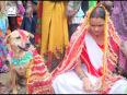 Girl Marries Dog To Warn Off Evil Spirit OMG