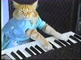 Check out this cute CAT PLAYING piano!