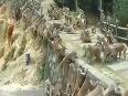 Monkey gang war