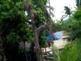 VIDEO - TREE CUTTING
