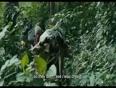 War-Witch-Official-Trailer