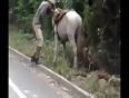 Foolish drunk man falls from horse video