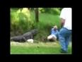 Alligator attack caught on camera video
