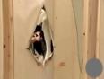 Surprise in cupboard video