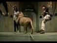 Lion attack dancer girl video