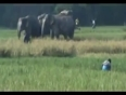 Dont mess with elephant video