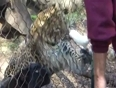 Dont feed animals in zoo video