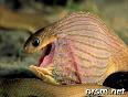 Utf 8 Snake Eating An Egg